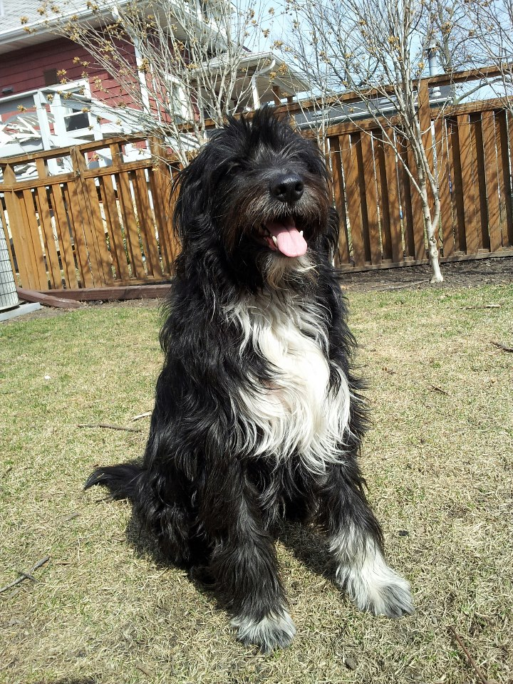 Vote For Maple